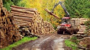 padure-lemn